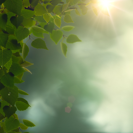 Rainy morning. Abstract seasonal backgrounds with green foliage, dew and sun beam Standard-Bild