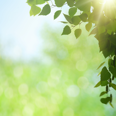 Summer morning. Abstract environmental backgrounds with green foliage and bokeh Standard-Bild - 119832002