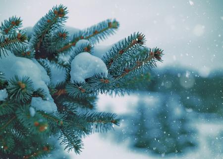Winter fresh. Abstract seasonal backgrounds with pretty fresh weather Standard-Bild - 119831318