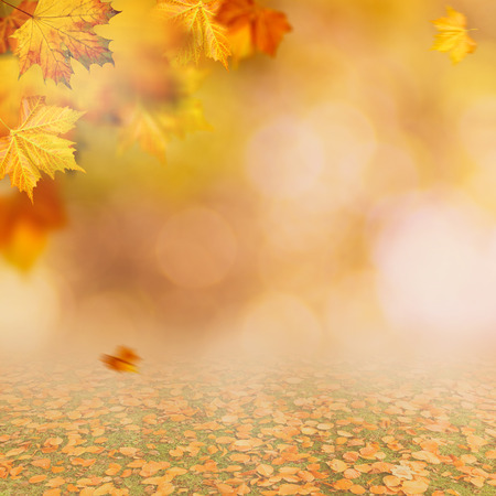 Autumnal fall. Beautiful seasonal backgrounds with maple leaf and bright colours Standard-Bild - 119831322