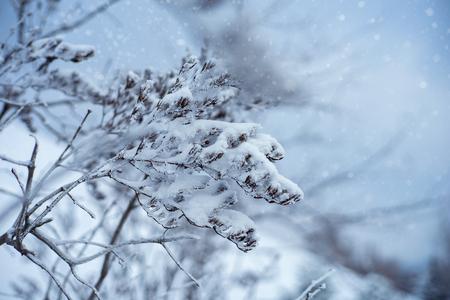 Hazy fresh. Abstract seasonal backgrounds with pretty fresh weather Standard-Bild - 119831405