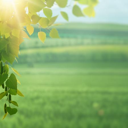 On the summer meadow, seasonal environment Standard-Bild - 119831409