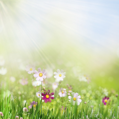 Beauty summer day on the smokey meadow, environmental backgrounds Standard-Bild - 119521648