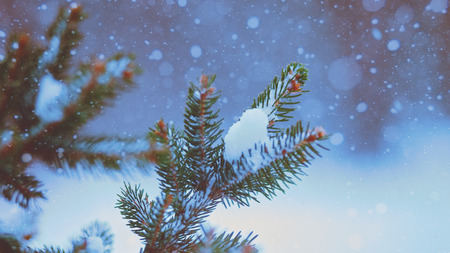 Winter fresh. Abstract seasonal backgrounds with pretty fresh weather