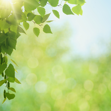 Summer morning. Abstract environmental backgrounds with green foliage and bokeh Standard-Bild - 119521664