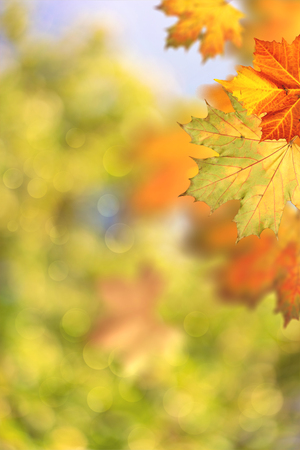Autumnal fall. Beautiful seasonal backgrounds with maple leaf and bright colours Standard-Bild - 119521666