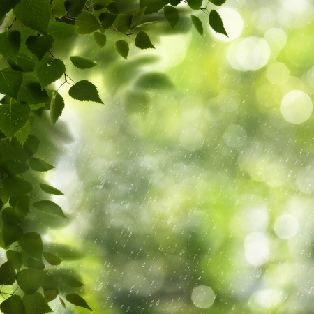 Summer morning. Abstract environmental backgrounds with green foliage and bokeh Standard-Bild - 119521667