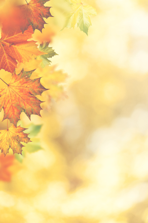 Autumnal fall. Beautiful seasonal backgrounds with maple leaf and bright colours