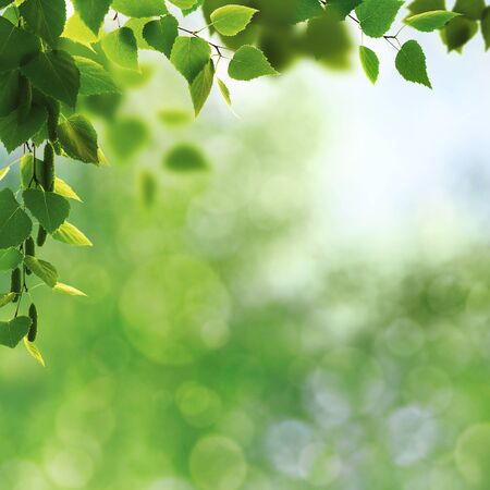 Abstract art backgrounds with green foliage Standard-Bild - 146139607