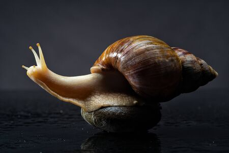 Alone snail on the wet background. Abstract backgrounds Standard-Bild