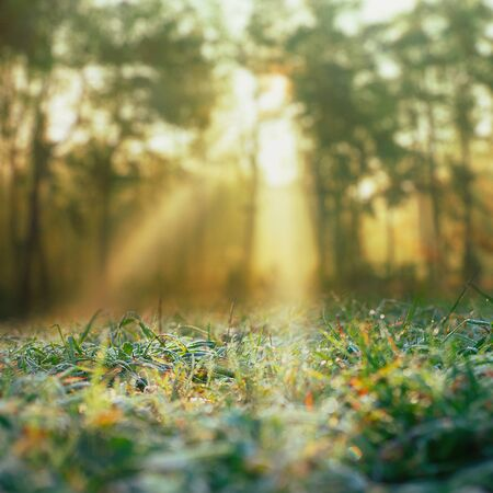 Autumn. Seasonal background with morning dew and sunbeam