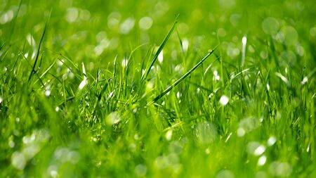 Green grass with morning dew bokeh. Art natural backgrounds