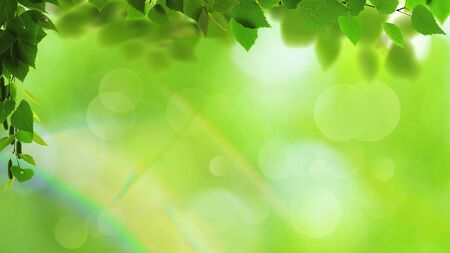 Abstract art backgrounds with green foliage. Environmental backgrounds Standard-Bild - 146138775
