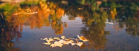 Beauty Autumn. Park lake and fallen leaves. Seasonal backgrounds
