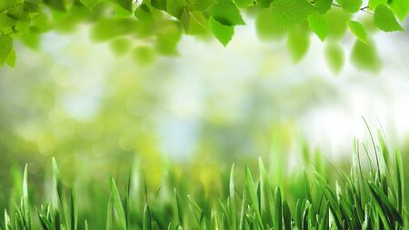 Abstract art backgrounds with green foliage. Environmental backgrounds