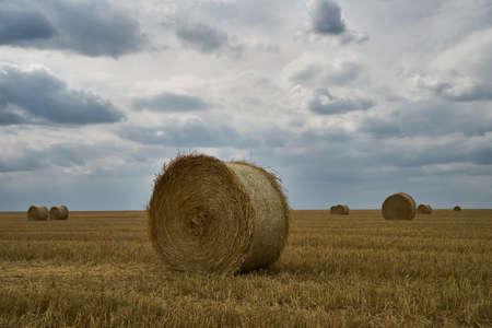Summer Harvesting on the field. Agricultural seasonal backgrounds Standard-Bild