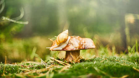 Beautiful autumn in the deep forest. Alone snail on the mushroom