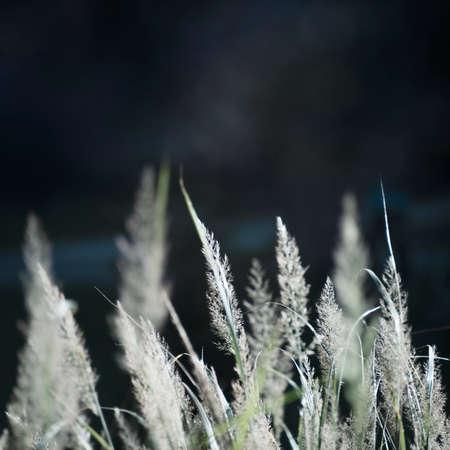 Reeds on the forest pond Standard-Bild