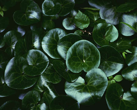 Abstract floral pattern with green foliage for your design Standard-Bild