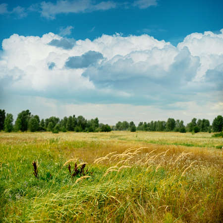 Tranquil meadow under the blue sky. Abstract natural backgrounds