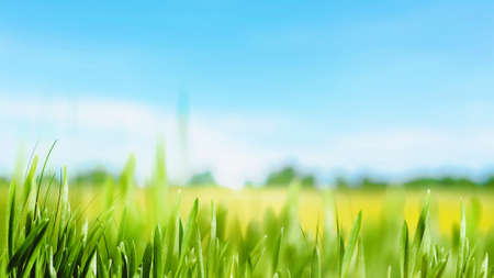Peaceful summer meadow. Beautiful natural backgrounds