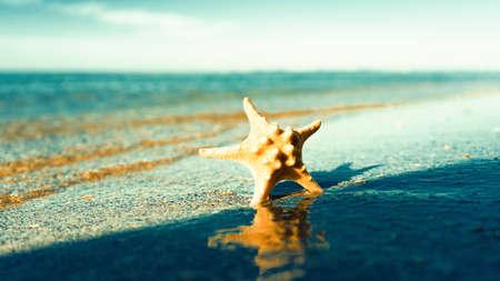 On the beach.  Abstract seasonal backgrounds. Star fish on the sea coast Standard-Bild