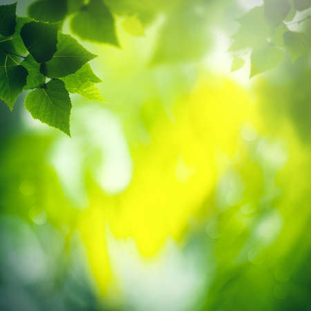 Green birch foliage with defocused background, Abstract seasonal wallpapers