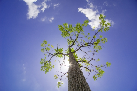 Tree under the sunshine, Thailand Stock Photo