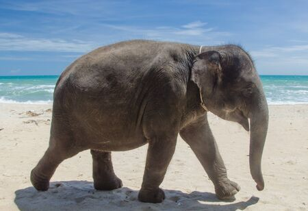 Thai elephant on the beach