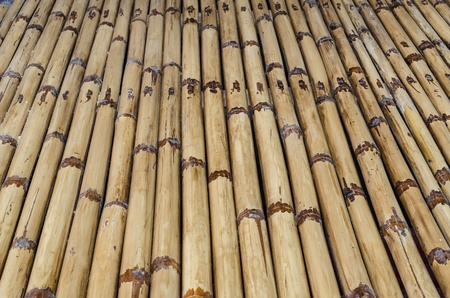 Bamboo background, texture photo