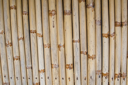 Bamboo texture and background photo