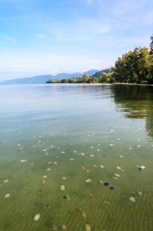 Many of jellyfished with clear water in Thai sea Stock Photo - 16324580