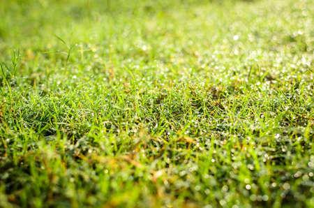 A grama com o orvalho no fundo manh� Banco de Imagens