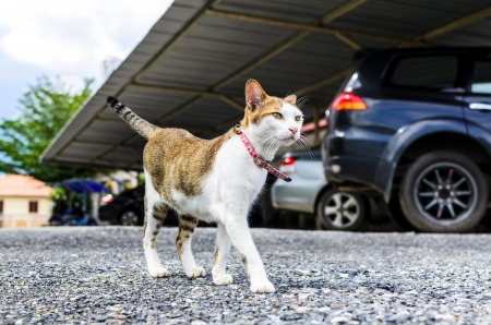 The beautiful cat is standing on ground Stock Photo - 16462634