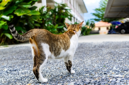 The beautiful cat is standing on ground photo