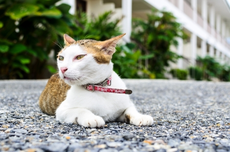 The beautiful cat is sitting on ground photo