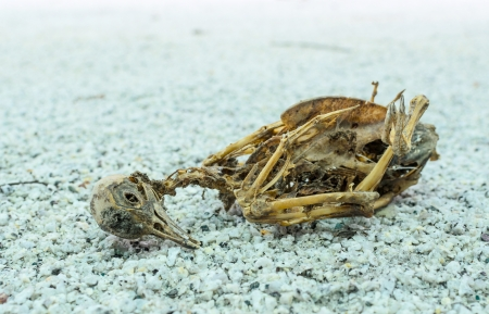 The remains of the dead bird on the ground photo