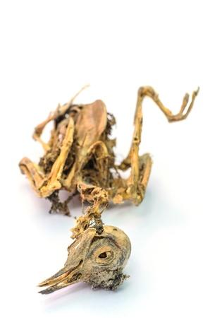 Os restos da ave morta isolado no branco Banco de Imagens
