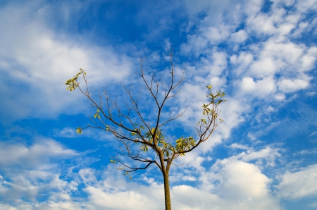 Trees with blue sky in worm eye view photo