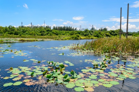 Lotus pond with the blue sky and petrochemical plant background photo