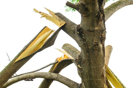 residential tree service: Branches broken with isolated on white