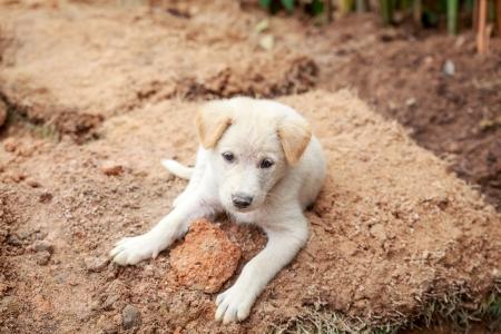 Cute white puppy sitting on the ground, Thailand photo