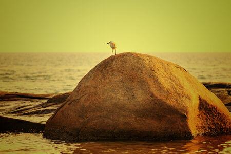 Bird on rock over scenic sunset background, Thailand