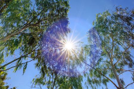 Levant les yeux à l'arbre avec le soleil et le ciel bleu Banque d'images - 25664296
