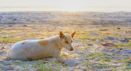 Chien détendu sur la plage de sable, Thaïlande Banque d'images - 25664446