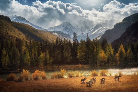 Horses walking free in meadow with snow capped mountain backdrop