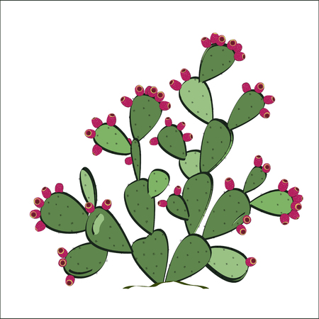 prickly fruit: Prickly pear with fruits. Vector illustration Illustration
