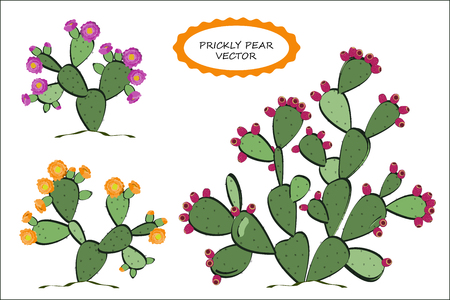 Prickly Pear vector. Prickly pear cactus with fruits, and flowers.