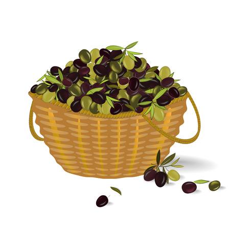 Basket with ripe olives. Olive harvest. Vector illustration