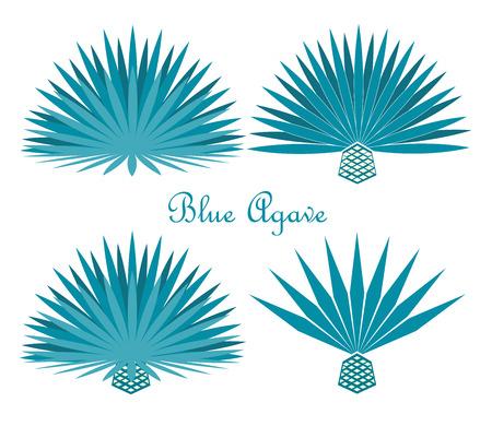 青のリュウゼツランまたはテキーラ リュウゼツランの植物。  イラスト・ベクター素材